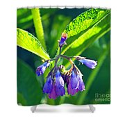 The Bells Of Ireland Shower Curtain