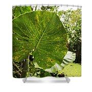 The Big Leaf Shower Curtain