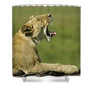 The Big Yawn Shower Curtain