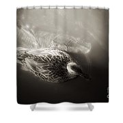 The Bird And The Fish Shower Curtain
