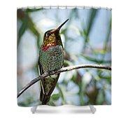 The Bird In The Foil Mask -- Anna's Hummingbird In Templeton, California Shower Curtain