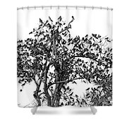 The Birds And The Tree Shower Curtain