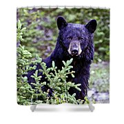 The Black Bear Stare Shower Curtain