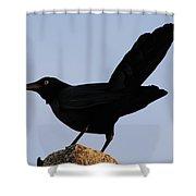 The Black Crow II Shower Curtain