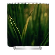 The Blade Shower Curtain