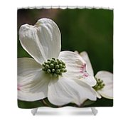 The Bloom Of Affection Shower Curtain