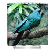 The Blue Bird Shower Curtain