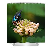 The Blue Bug Shower Curtain