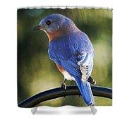 The Bluebird Shower Curtain