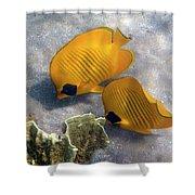 The Bluecheeked Butterflyfish Shower Curtain