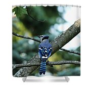 The Blues Song Shower Curtain