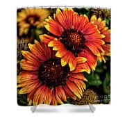 The Bold And Beautiful Pair Shower Curtain