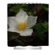 The Boulder Raspberry Flower Shower Curtain