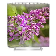The Branch Of Lilac Shower Curtain