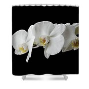 The Branch Of White Orchid On Black Background Shower Curtain
