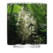 The Breath Of Fairies  Shower Curtain