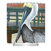 The Brown Pelican Shower Curtain