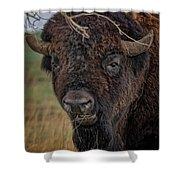 The Buffalo 2 Shower Curtain