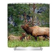 The Bugling Bull Elk Shower Curtain