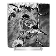 The Bullfinch Black And White Shower Curtain