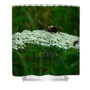The Bumblebee And The Fly Shower Curtain