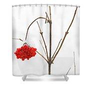 The Bunch Of Winter Rowan Shower Curtain