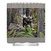 The Burly Bear Cub Close1 - Muir Woods National Monument - Marin County California Shower Curtain