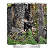 The Burly Bear Cub - Muir Woods National Monument - Marin County California Shower Curtain