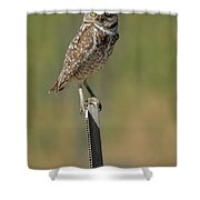The Burrowing Owl Shower Curtain