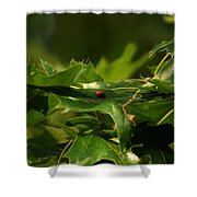 The Busy Lady Bugs Shower Curtain