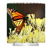 The Butterfly 2 Shower Curtain