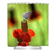 The Butterfly And The Coneflower Shower Curtain
