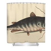 The Cat Fish (silurus Catus) Shower Curtain