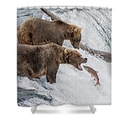 The Catch - Brown Bear Vs. Salmon Shower Curtain