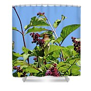 The Cedar In The Lilac Shower Curtain