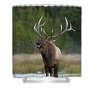 The Challenger Shower Curtain by Sandra Bronstein