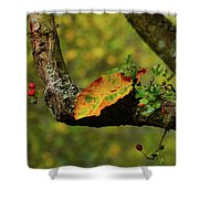 The Changing Season Shower Curtain
