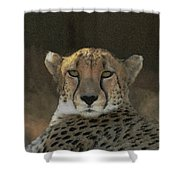 The Cheetah Shower Curtain