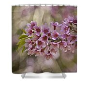 The  Cherry Shower Curtain