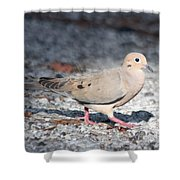 The Chipper Mourning Dove Shower Curtain