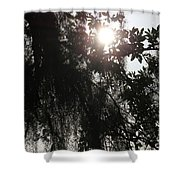The Cleansing Shower Curtain