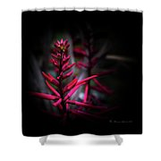 The Color Beautiful Shower Curtain