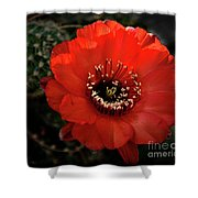 The Color Red Always Makes Smile Shower Curtain