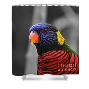 The Colorful Bird Shower Curtain