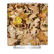 The Colors Of The Leaves In Autumn Shower Curtain