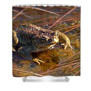The Common Toad 1 Shower Curtain
