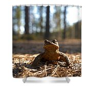 The Common Toad 3 Shower Curtain
