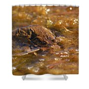The Common Toads 2 Shower Curtain