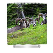 The Congregation Shower Curtain