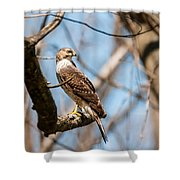 The Cooper's Hawk Shower Curtain